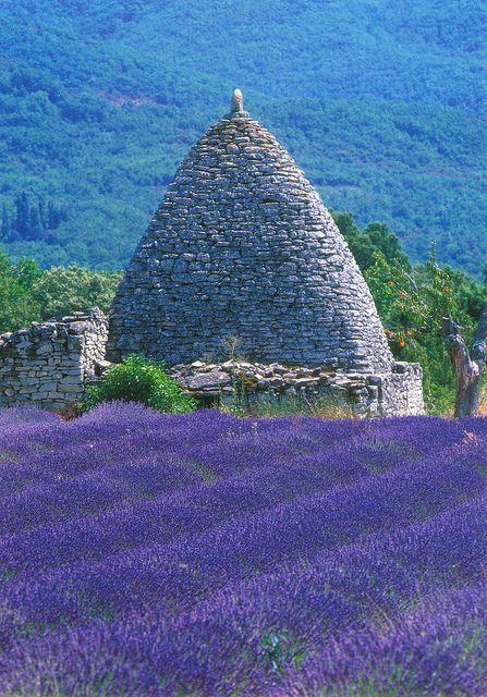 Lavender field in Provence ♥ღ www.myvintagecameras.com