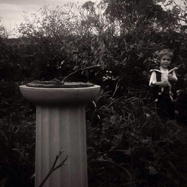 Pixies in the garden