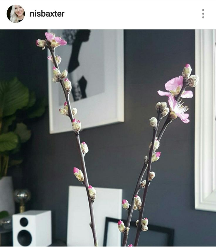 My grey jotun lady wall in the color Bergknatt and some fresh cherry flowers in my scandinavian home! Instagram Nisbaxter