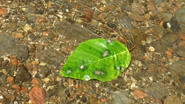 One lonely beautiful leaf