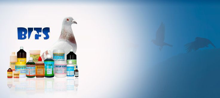 Mercasystems US: Pigeons Products and Pigeon Supplies online US store