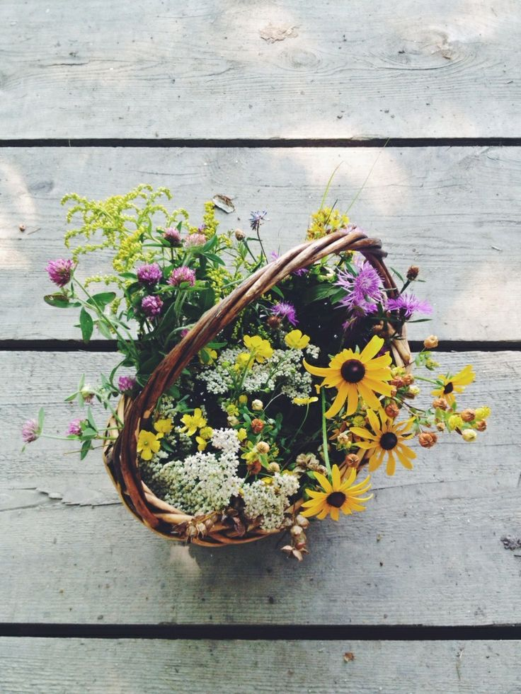 Collected wildflowers, Maine, Summer 2013 By Kirsten Rickert