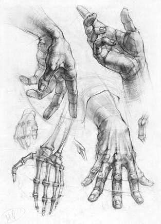 Hände zeichnen  академический рисунок руки - Поиск в Google