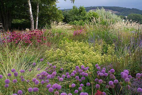 113 best ideas about piet oudolf on pinterest gardens for Piet oudolf pflanzplan