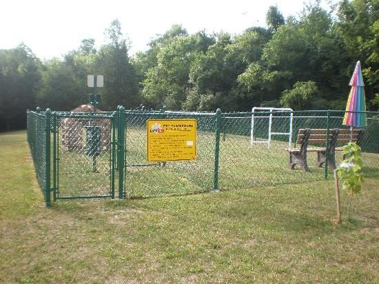 Best Dog Park Images On Pinterest Dog Park Dog Things And - Purpose built canine pool every dogs dream