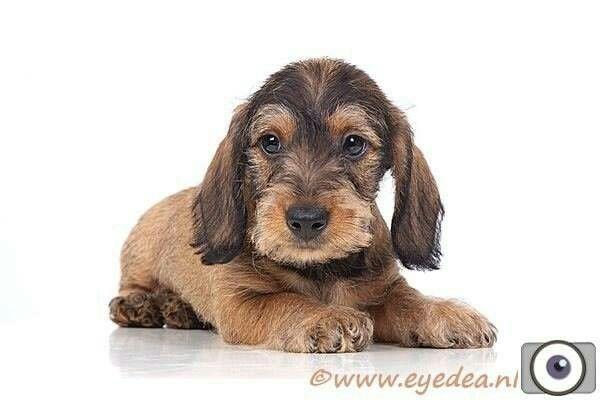 Karel als pup