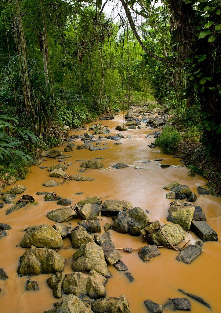 Muddy River In N Dalatando Botanical Garden, Angola   by Eric Lafforgue