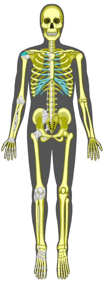 154 best images about Skeletal System on Pinterest | Activities ...