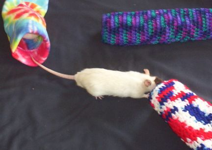 The Agile Rat - Rat Crafts (I like the crocheted tunnels!)