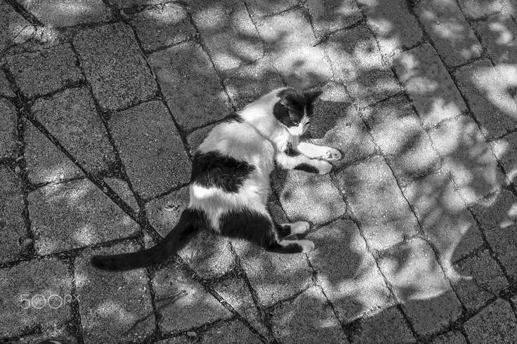 Street Cat - null