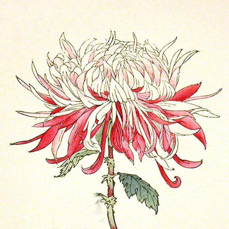 Chrysanthemum Flower Line Drawing : Best japanese images on pinterest art