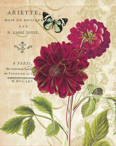 Red Dahlias Print by Paula Scaletta at AllPosters.com