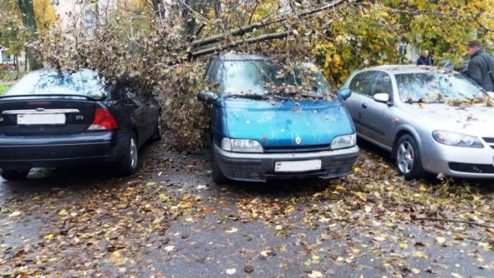 опасная парковка  В свои права вступила настоящая осень. Из-за климатических условий в Витебскеучастились случаи падения деревьев. Как известно, они падают, совсем невыбирая места, – на дорогу, на зеленую зону, в том числе и наприпаркованные автомобили. Кон