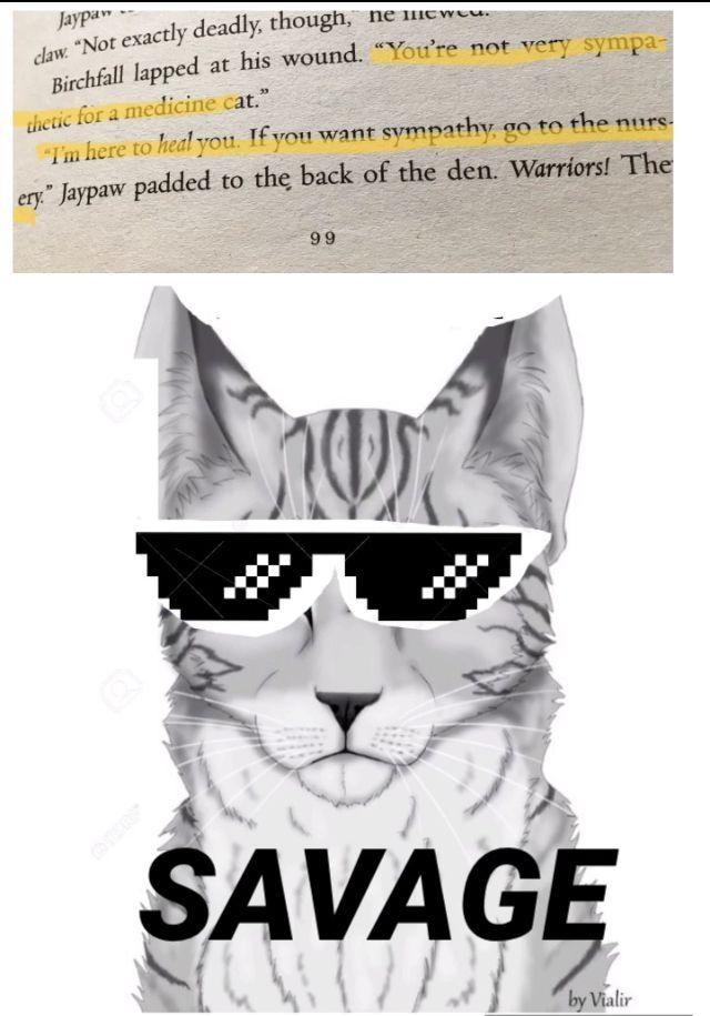 Jaypaw the SAVAGE #munchkincat