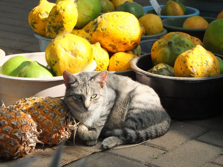 A cat relaxing in the sun, St Lucia, South Africa | One Footprint On The World