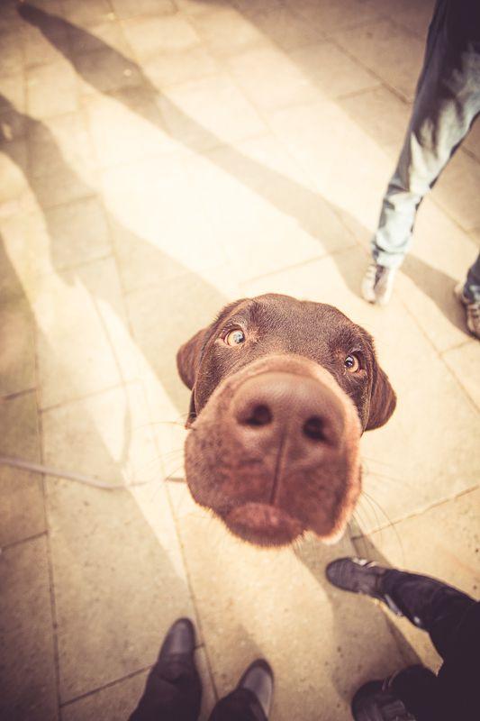 """Außer Rand und Band - Herbstshooting - Wieselblitz - Portrait- und Haustierfotografie von Elke Vogelsang, Hildesheim. Normally, I hate these """"top down"""" dog pictures, but when you go ALL the way... it gets cute again."""
