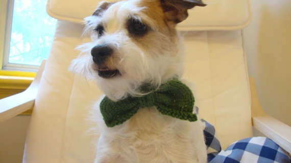 knitted bow tie for a dog or cat by purlknitting on Etsy, $15.00: Thoughts, Cat, Bows Ties, Dogs, Bows Tasting, Bow Ties, Knits Bows, Pet