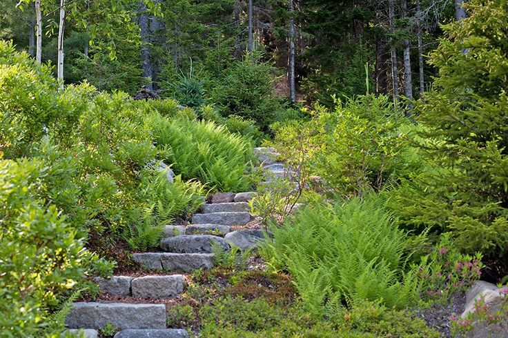 9 best foundation plantings images on pinterest for Association of landscape architects