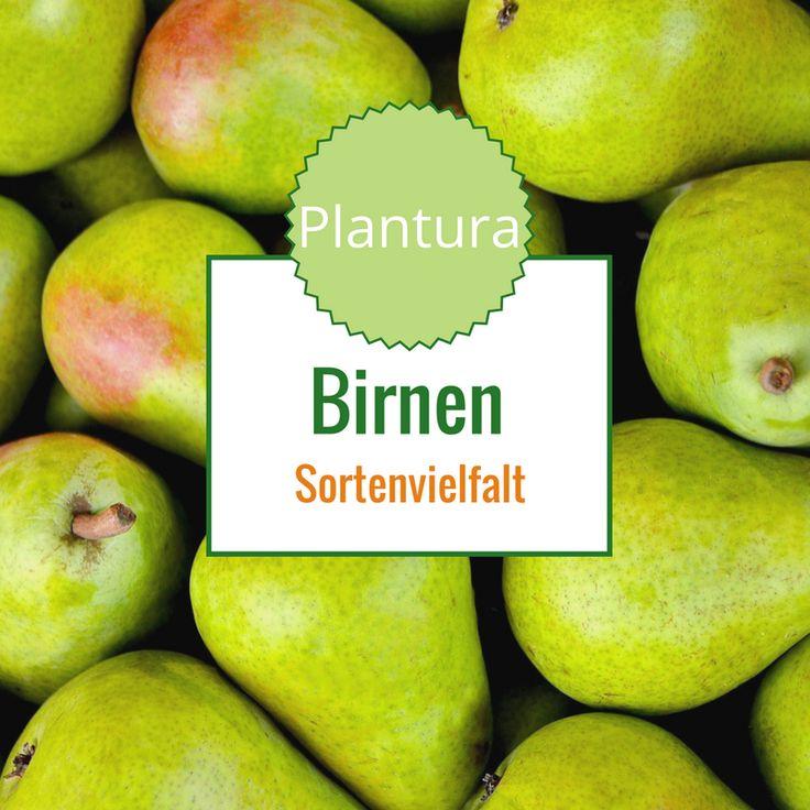 Birnen Sortenvielfalt: Mehr als Conference, Abate Fetel, Williams Christ oder Gute Luise Birne.