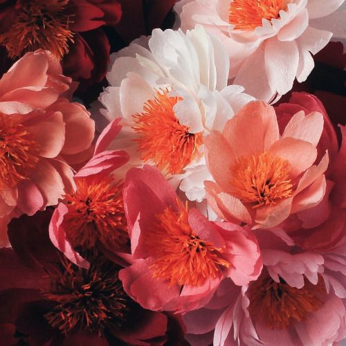 Paper Peonies by A Petal Unfolds