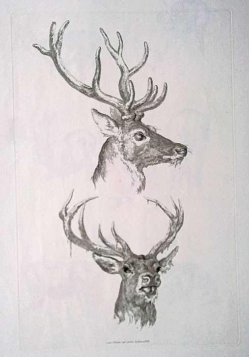 19th century original etching of deer by robert hills for 19th century tattoos