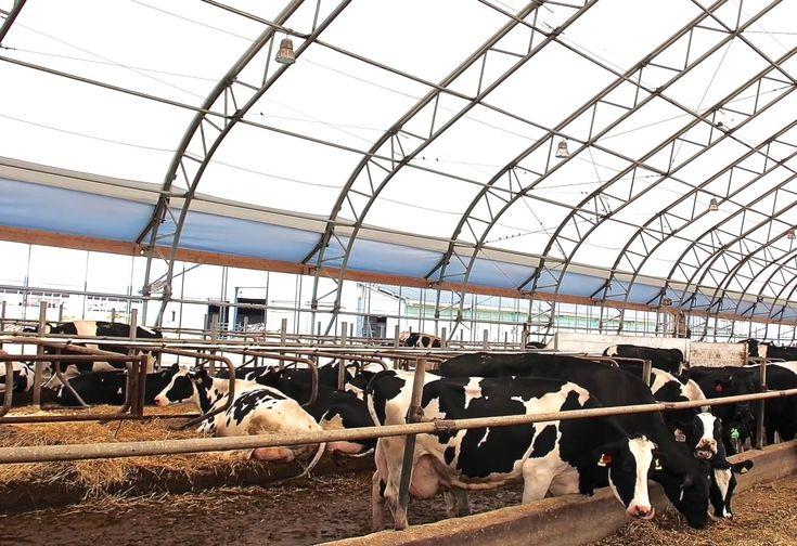 Как выбрать подходящую породу крупно рогатого скота?   Как выбрать подходящую породу Положительный результат задуманного предприятия напрямую зависит от того, насколько грамотно рассчитаны все нюансы: приобретение животных, их обслуживание, организации питания, подбор персонала, оформление разрешающих документов.  Сегодня существует множество пород скота, главная задача – выбрать наиболее подходящий вариант:  Герефордская распространена по всему миру. Прекрасно акклиматизируется в любых…