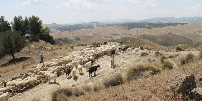 Gastblogger Paul Janssen maakte samen met zijn vrouw Lianne een rondreis door de onderste regio's van de Italiaanse laars: Calabrië, Campanië, Basilicata en Puglia.