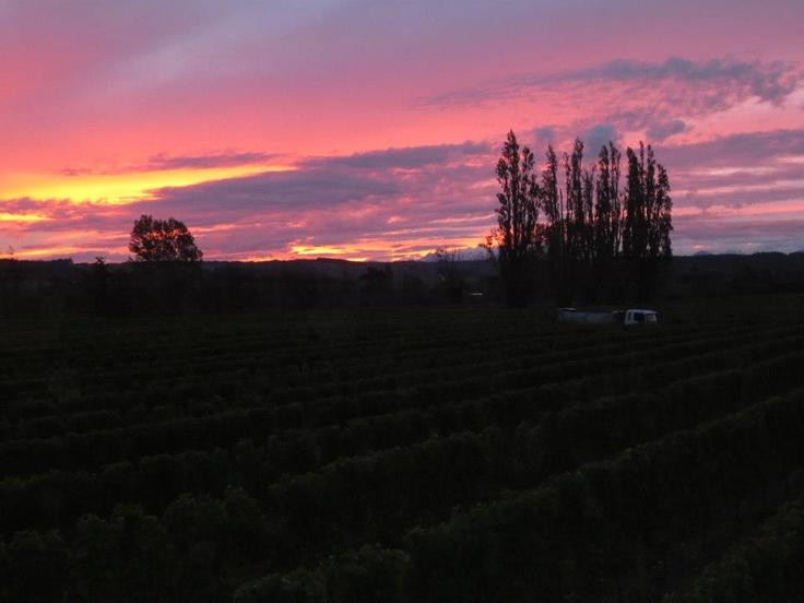 Seifried Sunset