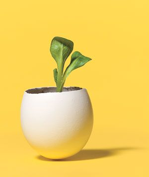 Get your seedlings started in an eggshell and then you can just plant the whole thing outside since the eggshell is biodegradable...what a cool idea!!!: Empty Eggshell, Spring Arrival, Outdoor Plants, Plants Eggshell, Plants Seedl, Cool Ideas, Eggs Cartons, Seedl Starters, Seedl Planters