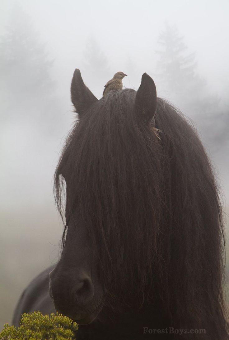 bird horse