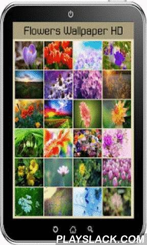 Flowers Wallpaper HD  Android App - playslack.com , Flowers Wallpaper HD is a cool new app that brings all the best HD wallpapers and backgrounds to your Android device. Choose your favorite spring flower, put it on your smartphone and enjoy stunning sight of blooming nature. Backgrounds HD offers free wallpapers from artists all over the world. backgrounds HD is a collection of the best full HD wallpapers and backgrounds for your smartphone or tablet. You can make the background image…
