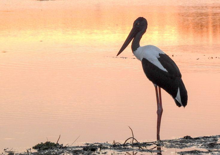 Fogg Dam – a natural bird and wildlife habitat