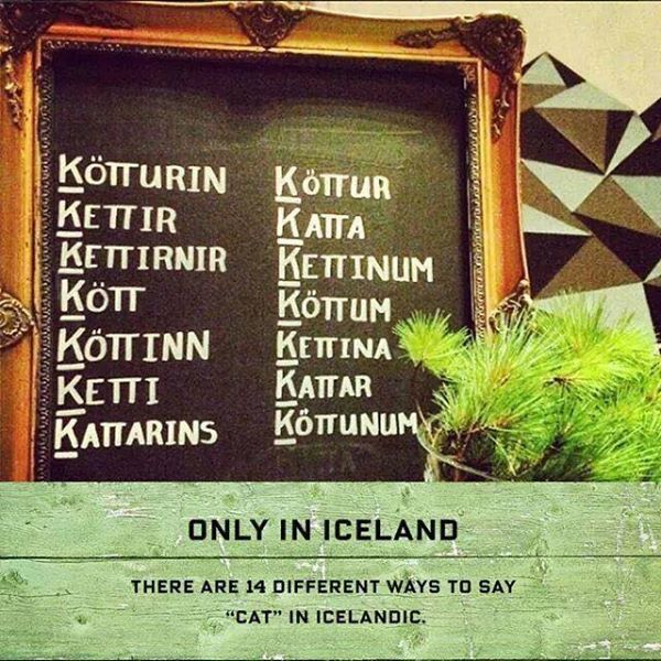 "There are 14 different ways to say ""cat"" in Icelandic."