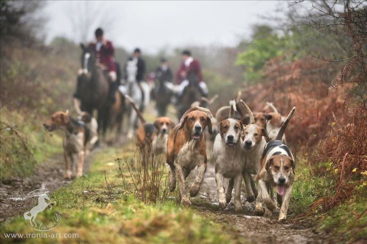 2170 best images about to the hounds on pinterest