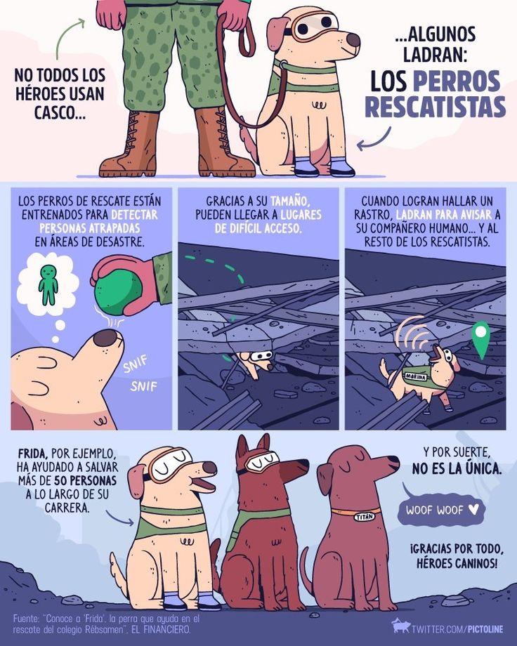 Frida y otros Perritos Rescatistas México 2017