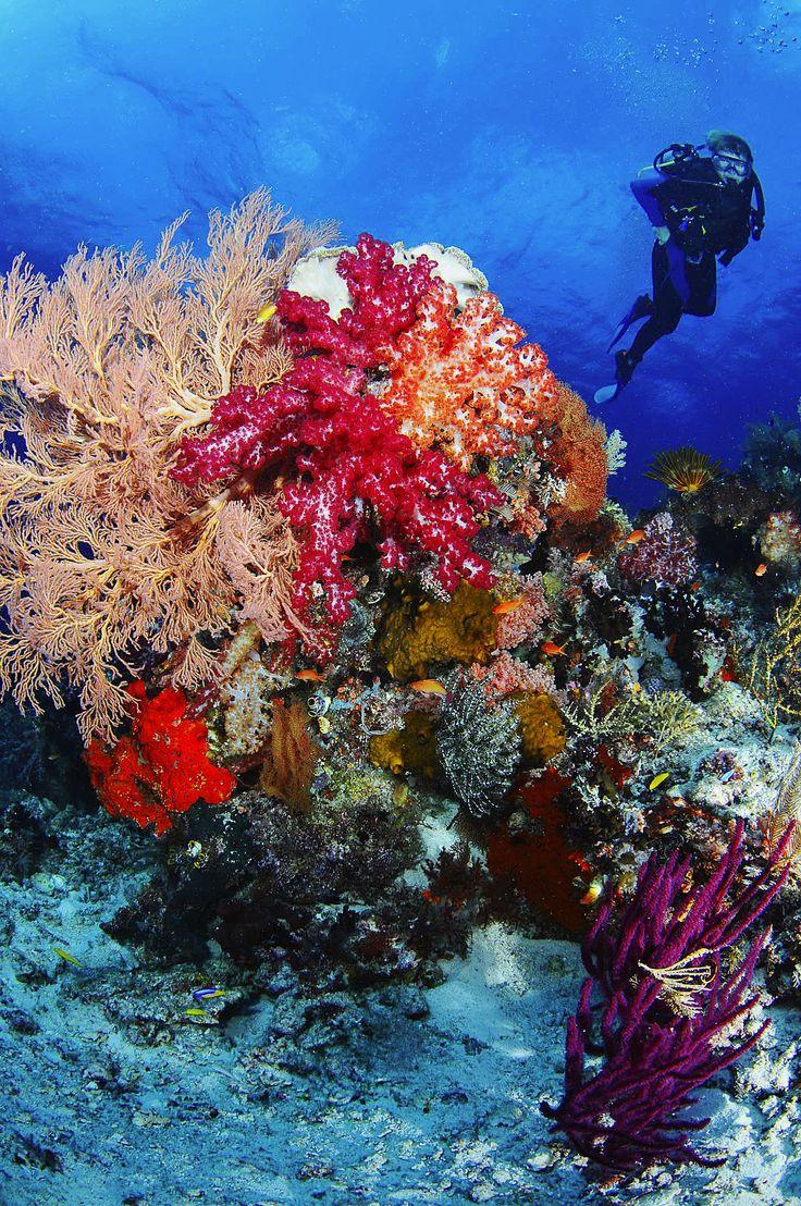 raja ampat diving - Szukaj w Google