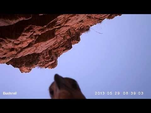 #VIDEO Eagle steals camera near crocodile meat trap