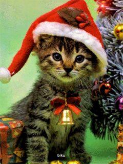 Merry Christmas Everyone !!! - Mobile FunBlog