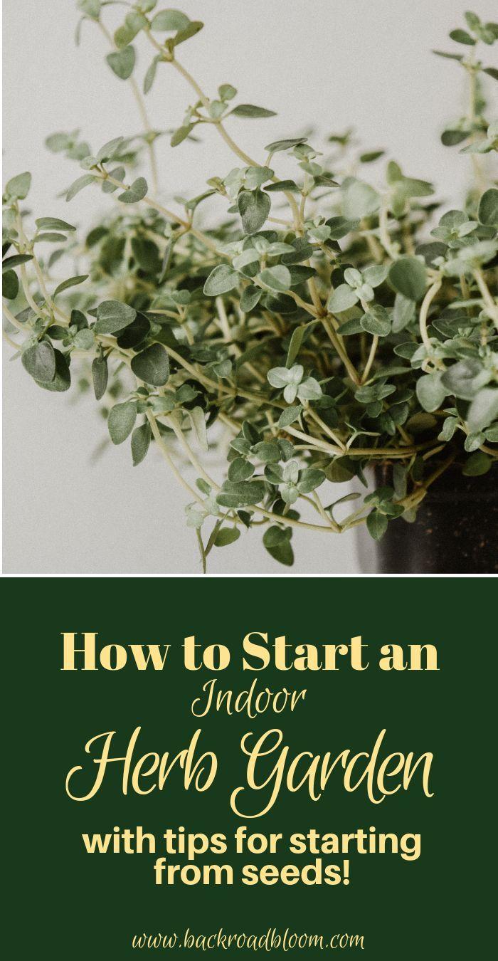 How To Start An Indoor Herb Garden Herbs Indoors Vegetable