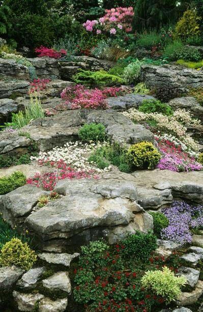 64 Best Alpine & Rock Gardens Images On Pinterest