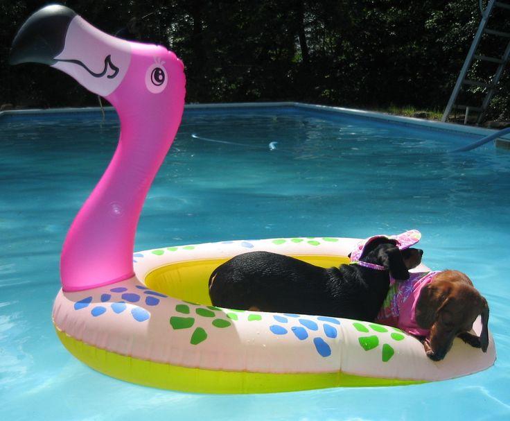 Flamingo Pool Float Flamingo 39 S Pinterest Pool Floats Dog Pools And Plays