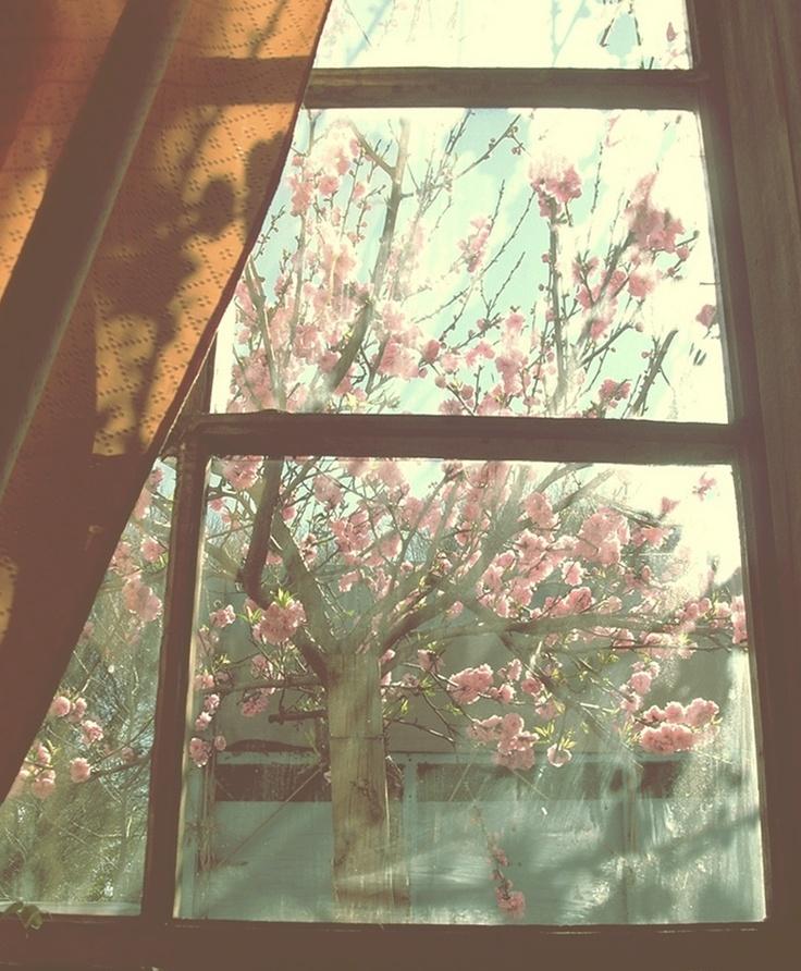 Tu ventana, la de las flores, la del sol.