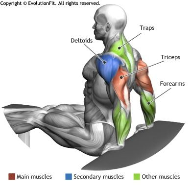 TRICEPS - BENCH DIPS                                                                                                                                                      Plus