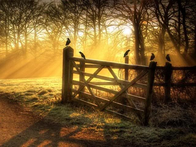 Sunrise, misty field, and a gate with birds ....Makes you want to stop and chat a bit before walking into the sunligh