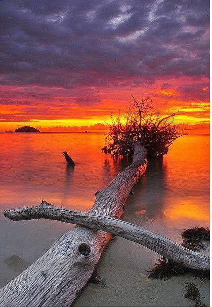 driftwood in sunset. Brenda Star