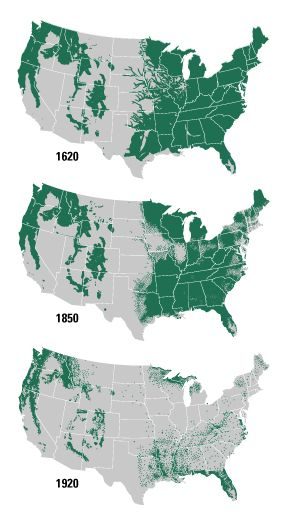 us forest loss since - Google Search