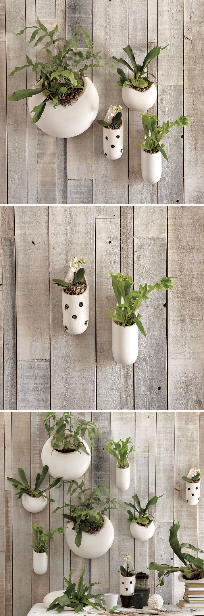 """Shane Powers Ceramic Wall Planters :: $19 - $69 