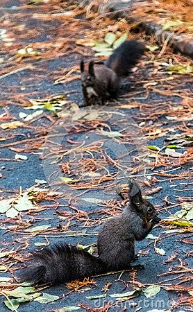 Little sweet squirrels on the ground, one eating and one watching.