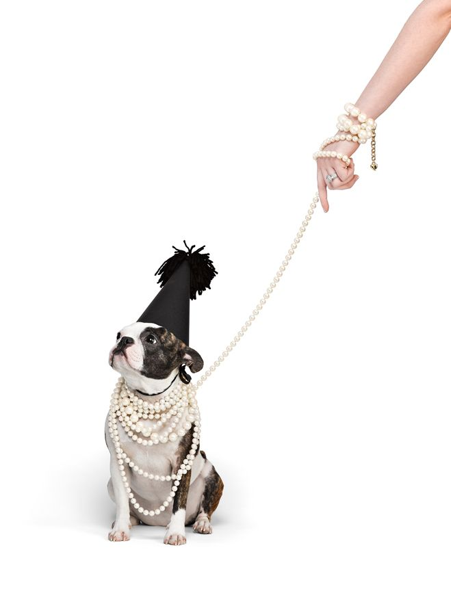 Antfarm Photography's Boston Terrier-French Bulldog mascot, Pixel, modeling for Carolee. #bostonterrier #frenchbulldog