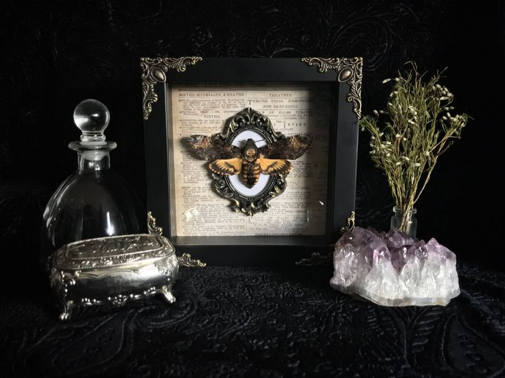 Deaths Head Moth Shadow Box, Taxidermy, Real Butterfly, Framed Butterfly, Preserved Butterfly, Victorian, Memento Mori, Gothic Decor by beyondthedarkveil on Etsy https://www.etsy.com/ca/listing/557753526/deaths-head-moth-shadow-box-taxidermy